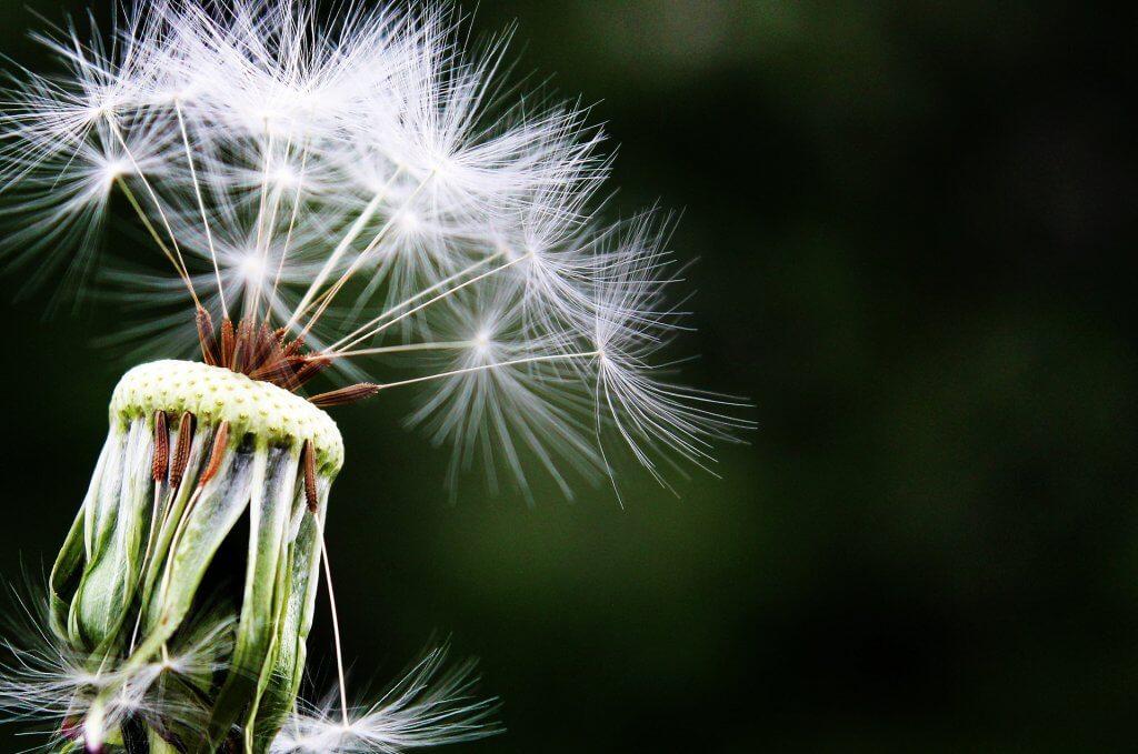 Alimentos contra la alergia- polen