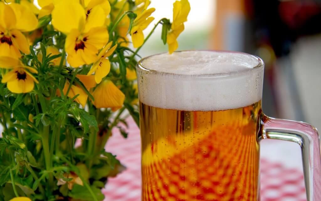 Vino o Cerveza-jarra de cerveza